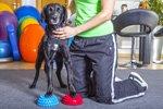 Terminplanung und Patientendokumentation für eine Tierphysiotherapie-Praxis gesucht