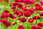 Kaufm�nnische Komplettl�sung f�r ein Unternehmen der Garten- und Anlagenpflege gesucht